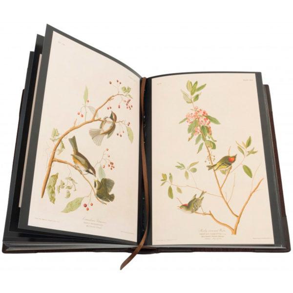 Подарочное издание «Птицы»